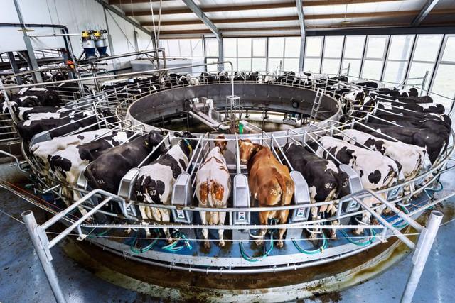 Hà Lan: Quốc gia nhỏ bé có thể nuôi cả thế giới - Ảnh 9.