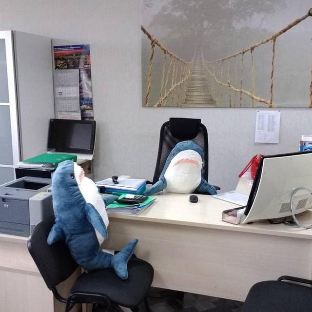 chú cá mập blaha - photo 6 15408992291101981026372 - Gặp gỡ Blaha – Chú cá mập nhồi bông đến từ IKEA đang làm náo loạn mạng xã hội thế giới