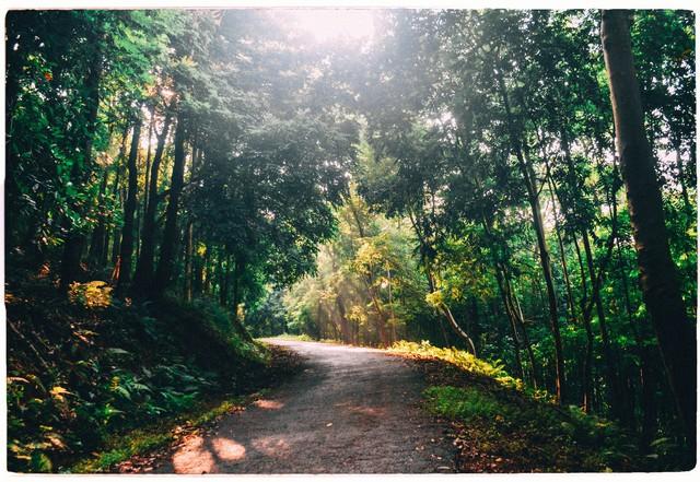 Đây là Đại học duy nhất ở Việt Nam có 1 khu rừng tuyệt đẹp ngay trong khuôn viên trường, tha hồ sống ảo - Ảnh 5.