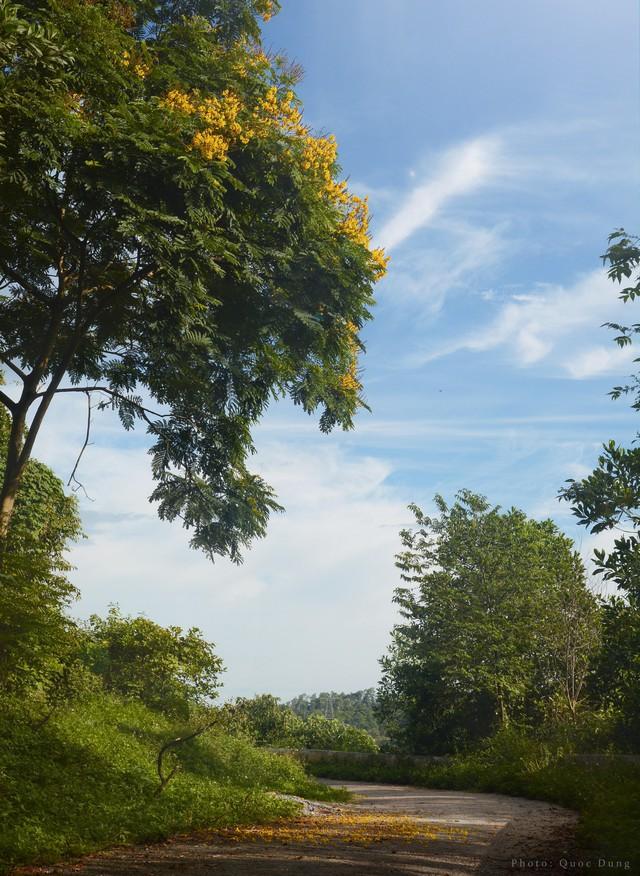 Đây là Đại học duy nhất ở Việt Nam có 1 khu rừng tuyệt đẹp ngay trong khuôn viên trường, tha hồ sống ảo - Ảnh 6.