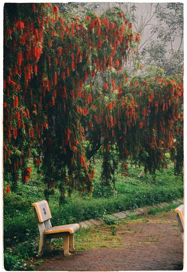 Đây là Đại học duy nhất ở Việt Nam có 1 khu rừng tuyệt đẹp ngay trong khuôn viên trường, tha hồ sống ảo - Ảnh 8.