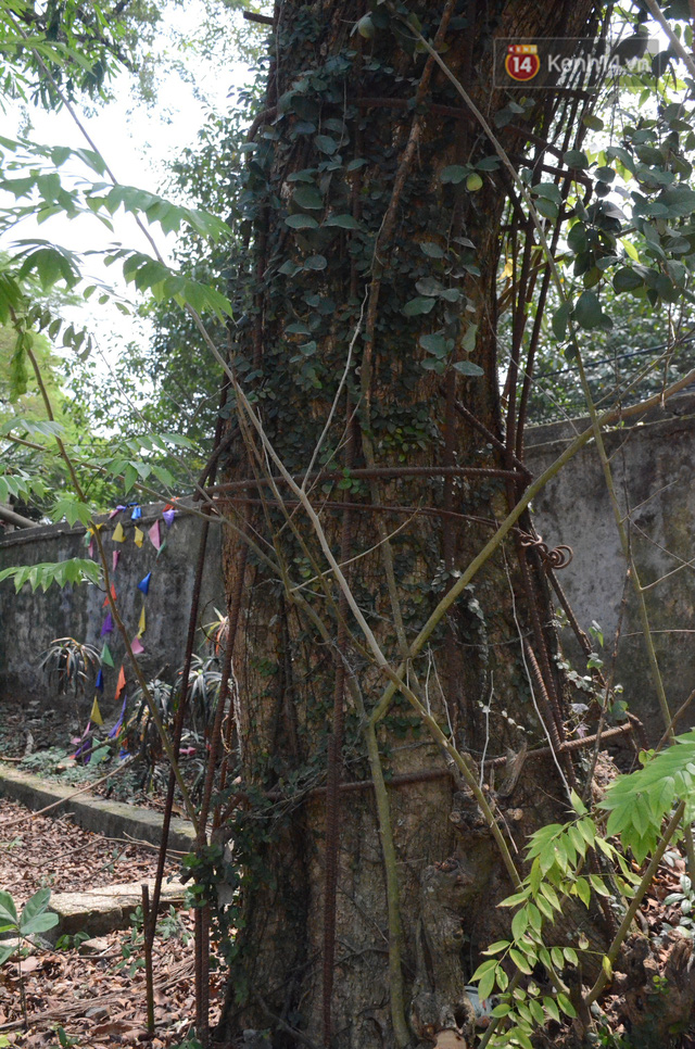 Ly kỳ chuyện cây sưa giá trăm tỷ ở Hà Nội, người dân mất ăn mất ngủ thay nhau canh giữ, mặc áo giáp sắt để chống kẻ trộm - Ảnh 1.