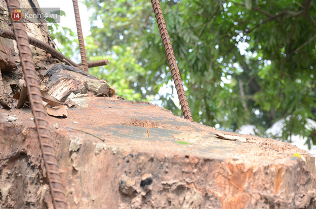 Ly kỳ chuyện cây sưa giá trăm tỷ ở Hà Nội, người dân mất ăn mất ngủ thay nhau canh giữ, mặc áo giáp sắt để chống kẻ trộm - Ảnh 3.