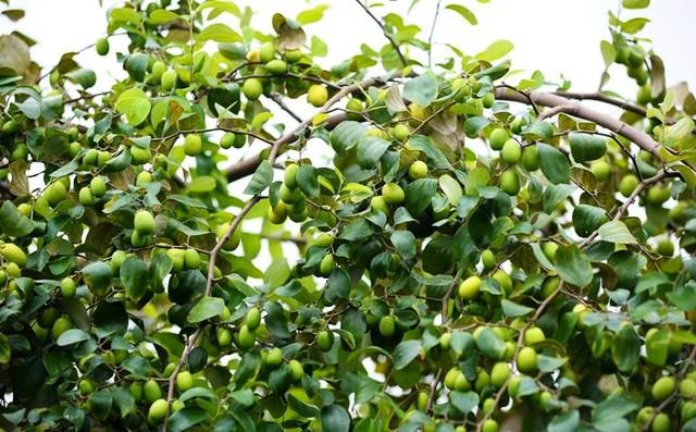 Ngay tại Hà Nội có một ngôi trường rộng gần 200ha, cây cối, hoa trái phủ xanh khắp nơi như rừng nhiệt đới - Ảnh 19.