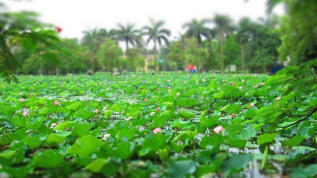 Ngay tại Hà Nội có một ngôi trường rộng gần 200ha, cây cối, hoa trái phủ xanh khắp nơi như rừng nhiệt đới - Ảnh 6.