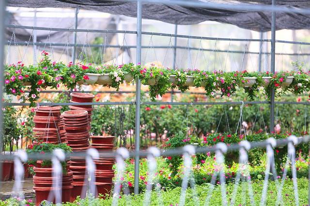Ngay tại Hà Nội có một ngôi trường rộng gần 200ha, cây cối, hoa trái phủ xanh khắp nơi như rừng nhiệt đới - Ảnh 9.