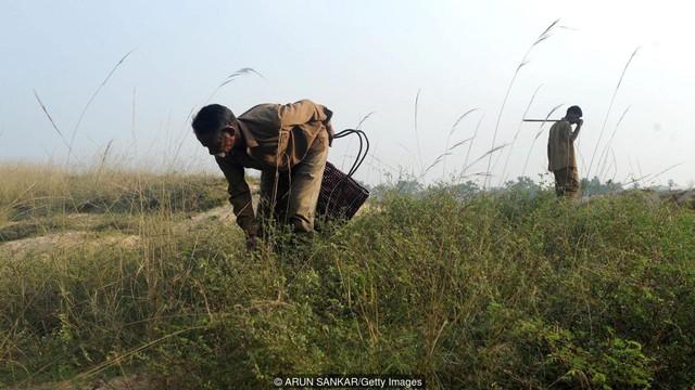 Tộc người rắn kỳ lạ tại Ấn Độ: ngành nghề độc đáo nhưng bị kỳ thị tại chính quê hương của mình - Ảnh 3.