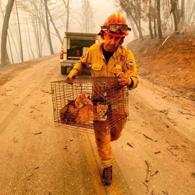 Chùm ảnh California sau cháy rừng: Thiên đường chìm trong biển lửa, con người nhỏ bé trốn chạy nhưng không bao giờ bỏ cuộc - Ảnh 24.