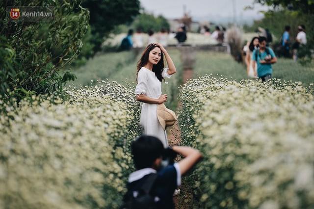 Vườn cúc hoạ mi ở Hà Nội thất thủ cuối tuần: 1 mét vuông có chục nhiếp ảnh gia và mẫu - Ảnh 12.