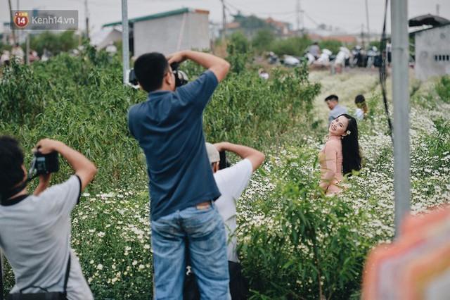 Vườn cúc hoạ mi ở Hà Nội thất thủ cuối tuần: 1 mét vuông có chục nhiếp ảnh gia và mẫu - Ảnh 13.