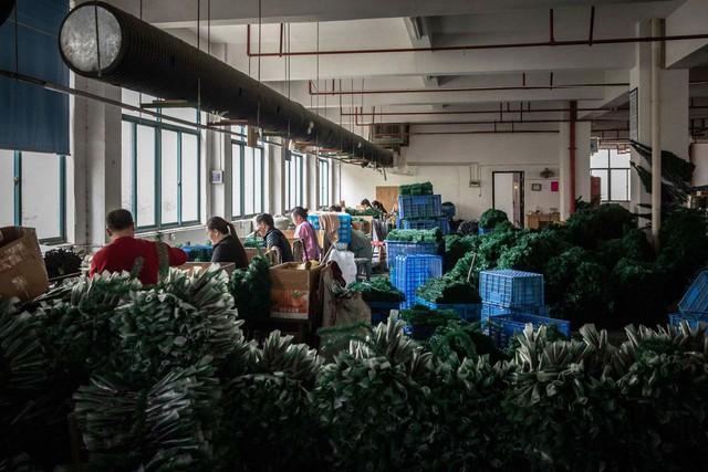 Có một mặt hàng chỉ Trung Quốc mới có thể sản xuất nhiều và rẻ đến mức dù ông Trump áp thuế 25% khách hàng Mỹ vẫn mua - Ảnh 3.