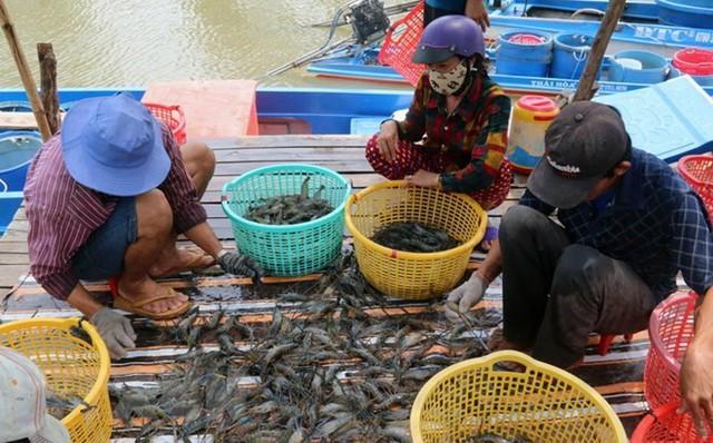 Nâng cao giá trị thủy sản nuôi trồng: Đâu là giải pháp hiệu quả? - Ảnh 1.