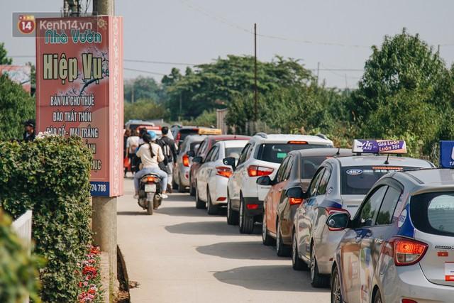 Vườn cúc họa mi ở Hà Nội tiếp tục thất thủ: Đường vào tắc nghẽn, chụp một bức ảnh phải né bao nhiêu người - Ảnh 2.