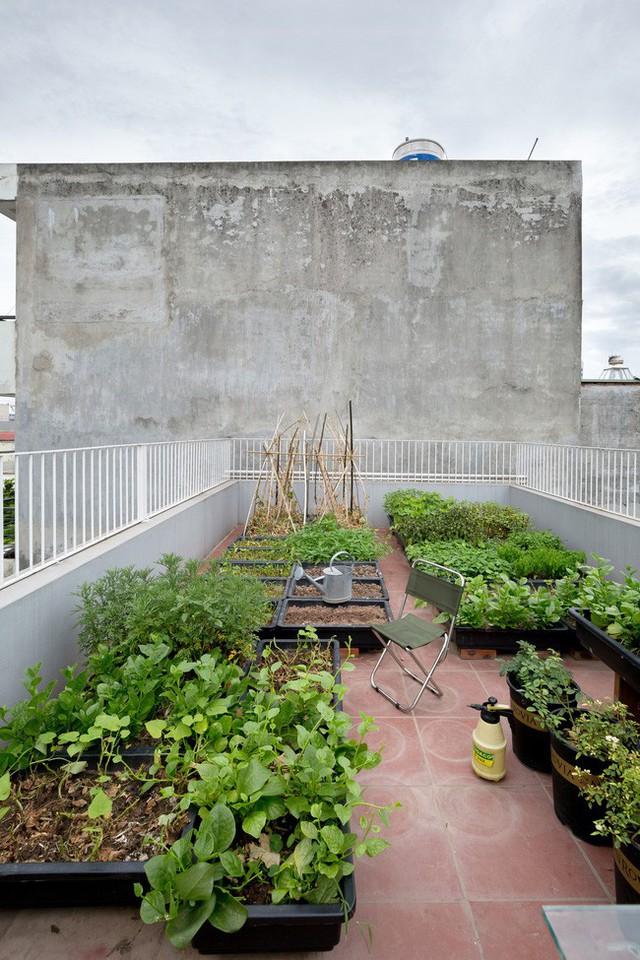 Xây từ miếng đất nhiều nhược điểm, ngôi nhà 85m² ở Hà Nội này vẫn được trầm trồ khen vừa đẹp, vừa xanh - Ảnh 15.