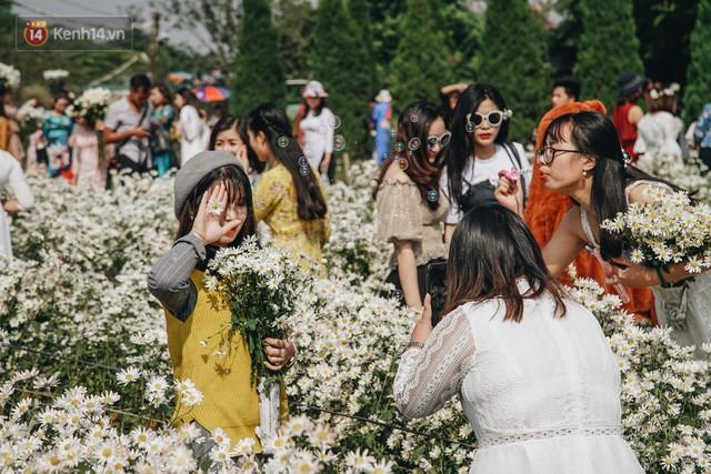 Vườn cúc họa mi ở Hà Nội tiếp tục thất thủ: Đường vào tắc nghẽn, chụp một bức ảnh phải né bao nhiêu người - Ảnh 18.