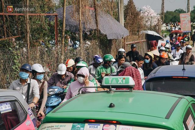 Vườn cúc họa mi ở Hà Nội tiếp tục thất thủ: Đường vào tắc nghẽn, chụp một bức ảnh phải né bao nhiêu người - Ảnh 5.