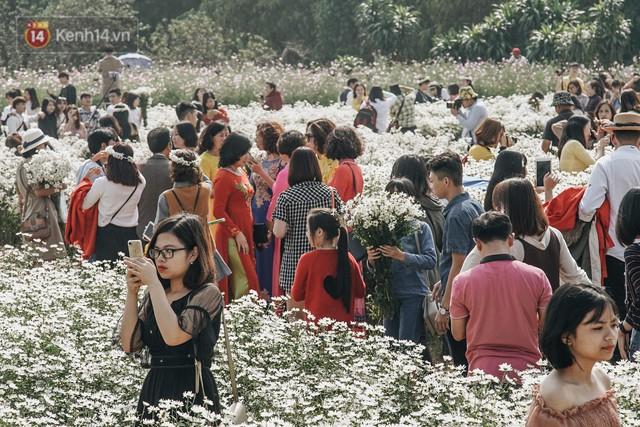 Vườn cúc họa mi ở Hà Nội tiếp tục thất thủ: Đường vào tắc nghẽn, chụp một bức ảnh phải né bao nhiêu người - Ảnh 8.