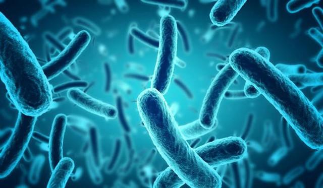 Bill Gates cảnh báo về loại dịch bệnh mới có thể giết chết 30 triệu người chỉ trong vòng 6 tháng - Ảnh 2.