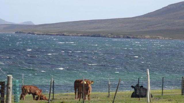 Quá mệt mỏi với bè lũ chim cánh cụt cùng 6000 con cừu, gia đình người Anh rao bán cả hòn đảo tặng kèm mọi con vật trên đó - Ảnh 4.