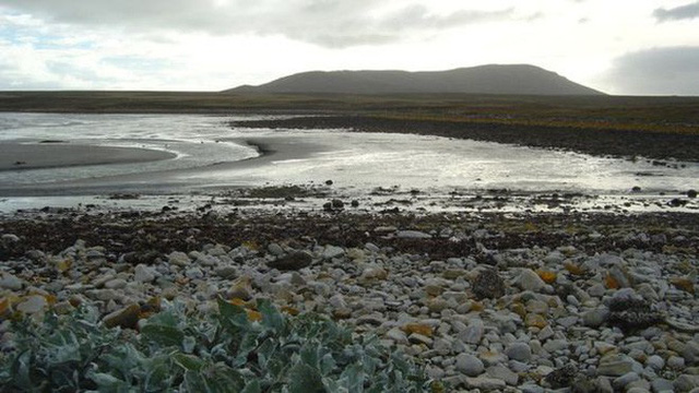 Quá mệt mỏi với bè lũ chim cánh cụt cùng 6000 con cừu, gia đình người Anh rao bán cả hòn đảo tặng kèm mọi con vật trên đó - Ảnh 5.