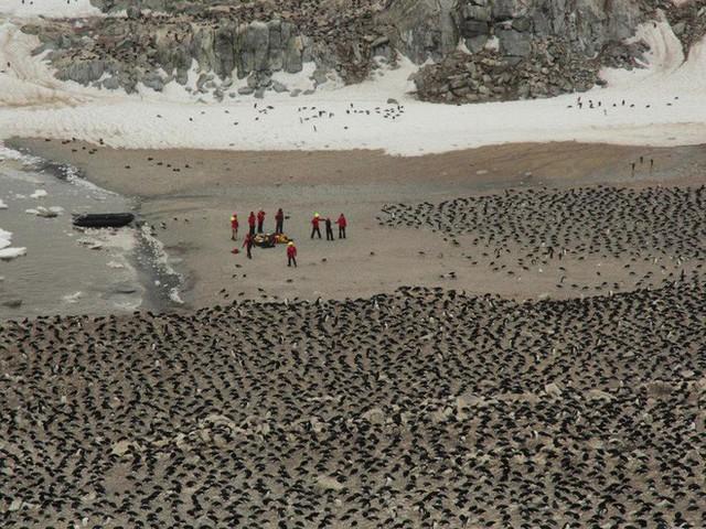 Lượng phân khổng lồ có thể thấy từ vũ trụ làm lộ ra đàn chim cánh cụt 1,5 triệu con gần Nam Cực - Ảnh 2.