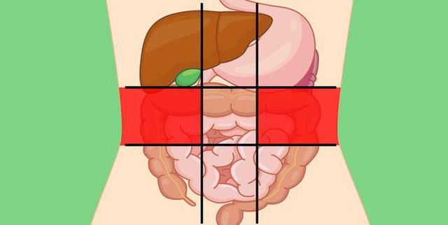 Nhờ bản đồ bụng này mà bạn sẽ biết các cơn đau ở mỗi vị trí trên bụng là do nguyên nhân nào gây ra - Ảnh 4.