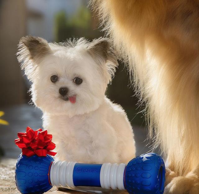 Norbert - chú chó hot Instagram dùng sự cute vô đối chữa lành vết thương tâm hồn cho mọi người - Ảnh 12.