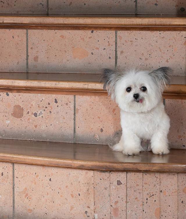 Norbert - chú chó hot Instagram dùng sự cute vô đối chữa lành vết thương tâm hồn cho mọi người - Ảnh 13.