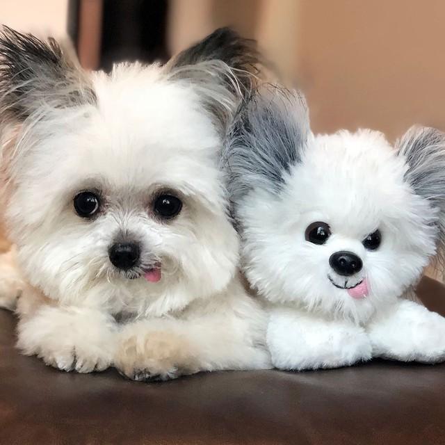 Norbert - chú chó hot Instagram dùng sự cute vô đối chữa lành vết thương tâm hồn cho mọi người - Ảnh 4.