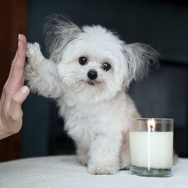 Norbert - chú chó hot Instagram dùng sự cute vô đối chữa lành vết thương tâm hồn cho mọi người - Ảnh 7.
