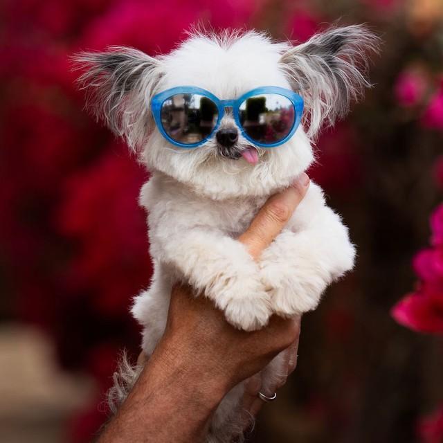 Norbert - chú chó hot Instagram dùng sự cute vô đối chữa lành vết thương tâm hồn cho mọi người - Ảnh 9.