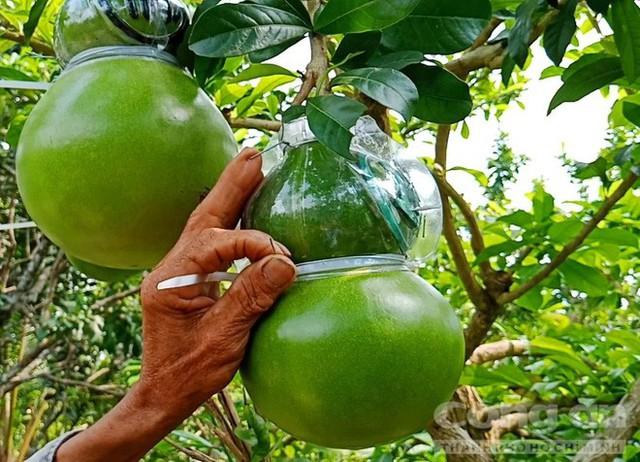 Trái cây độc bán Tết giá bạc triệu mỗi cặp - Ảnh 10.