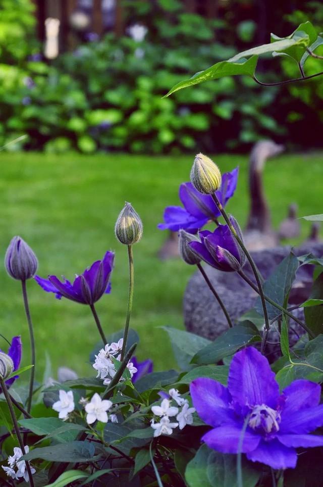 Tất bật nhiều năm tuổi trẻ, người phụ nữ tuổi 40 dành dụm tiền mua căn nhà vườn xinh xắn sống cuộc đời an yên - Ảnh 9.
