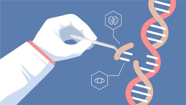 Vụ việc tại Trung Quốc còn chưa lắng xuống, đã có nhà khoa học Harvard tuyên bố sẽ chỉnh sửa gen tinh trùng người tại Mỹ - Ảnh 3.