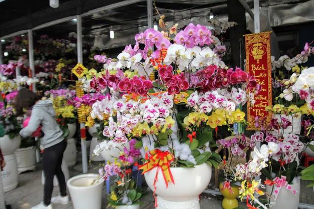 1 triệu đồng một cành lan, người Sài Gòn đổ xô mua - Ảnh 4.