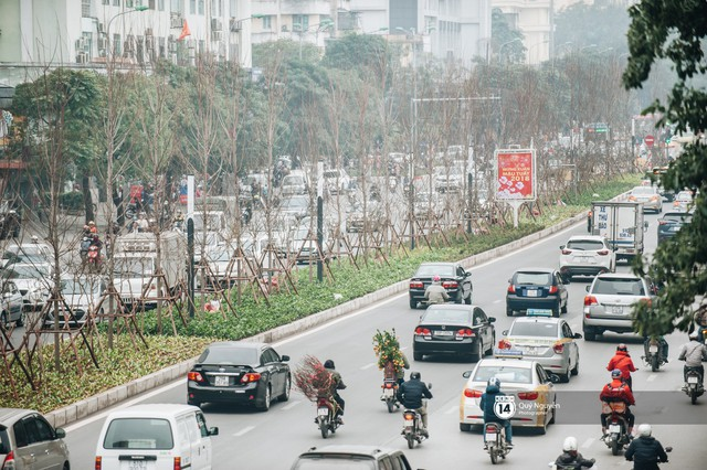 Hà Nội: Hàng cây phong lá đỏ từng được ví như những cành củi khô bắt đầu nảy lộc đúng dịp Tết - Ảnh 13.