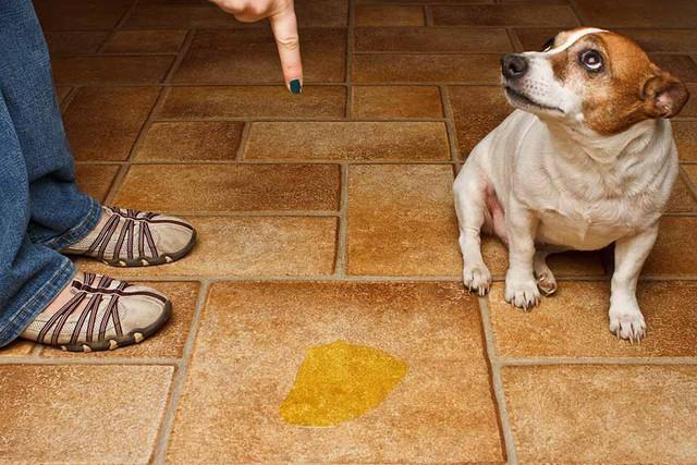 Nhân năm con Chó, đây là những sự thật cool ngầu chẳng ai biết về loài vật dễ thương nhất quả đất này - Ảnh 2.