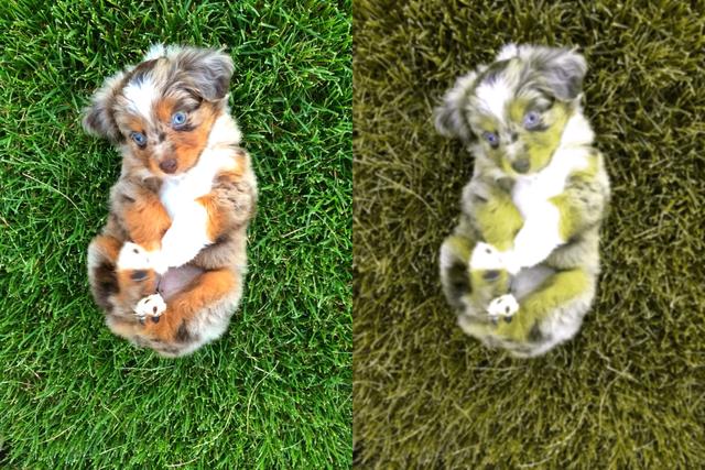 Nhân năm con Chó, đây là những sự thật cool ngầu chẳng ai biết về loài vật dễ thương nhất quả đất này - Ảnh 3.