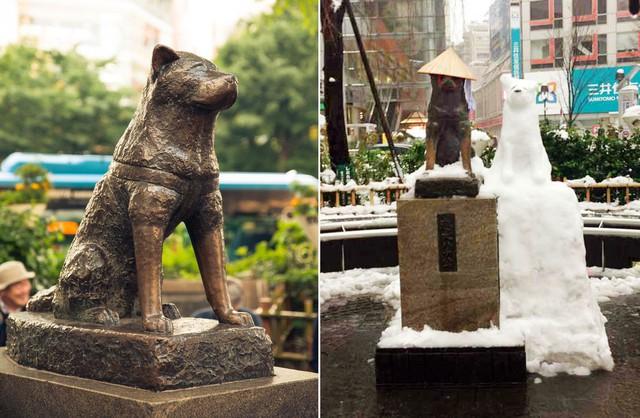 Câu chuyện cảm động về chú chó hơn 9 năm đợi người chủ quá cố ở sân ga rồi ra đi trong niềm tiếc thương của cả nước Nhật - Ảnh 6.