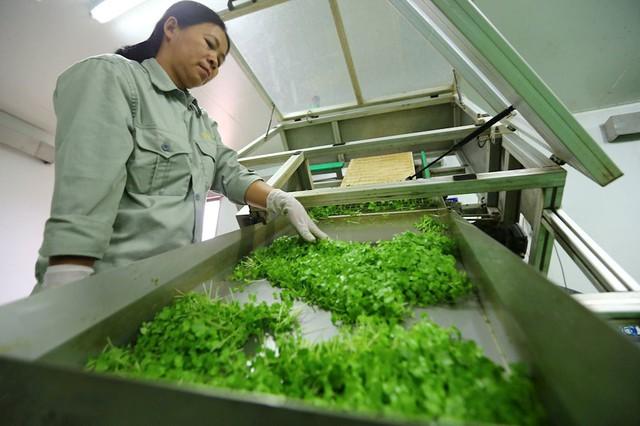 Đại gia Việt liên tiếp nhảy vào nông nghiệp công nghệ cao - Ảnh 1.