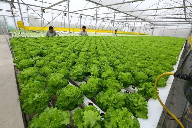 Đại gia Việt liên tiếp nhảy vào nông nghiệp công nghệ cao - Ảnh 2.