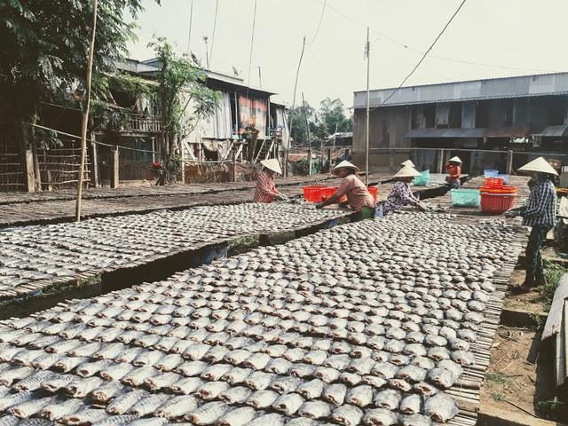 Làng cá khô lâu đời ở Miền Tây Nam Bộ - Ảnh 1.