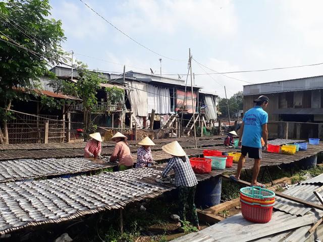 Làng cá khô lâu đời ở Miền Tây Nam Bộ - Ảnh 2.