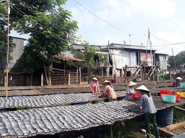 Làng cá khô lâu đời ở Miền Tây Nam Bộ - Ảnh 3.