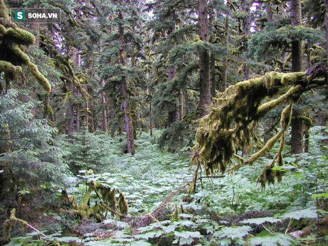 Đây là loài cây cô đơn nhất thế giới nhưng lại ẩn giấu bí mật rất quan trọng - Ảnh 3.