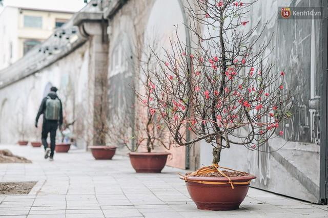 Phố bích họa Phùng Hưng hồi sinh, trở thành phố đi bộ kết nối với không gian chợ Đồng Xuân - Ảnh 11.