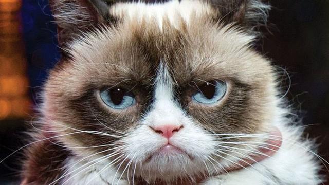 Microsoft đã kiểm chứng: Nhân viên bị giảm năng suất làm việc bởi những đoạn video về mèo - Ảnh 1.