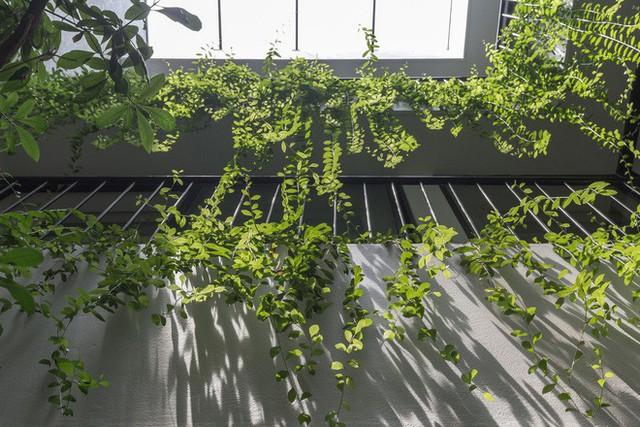 Ngôi nhà nhìn đâu cũng thấy cây xanh và có hẳn một vườn rau trên sân thượng cực rộng ở Hà Nội - Ảnh 18.