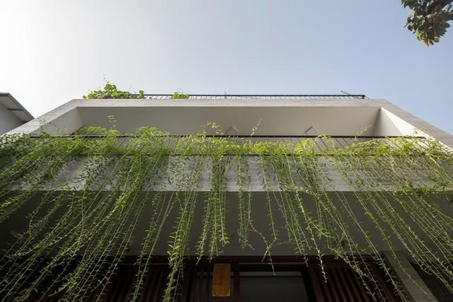 Ngôi nhà nhìn đâu cũng thấy cây xanh và có hẳn một vườn rau trên sân thượng cực rộng ở Hà Nội - Ảnh 19.