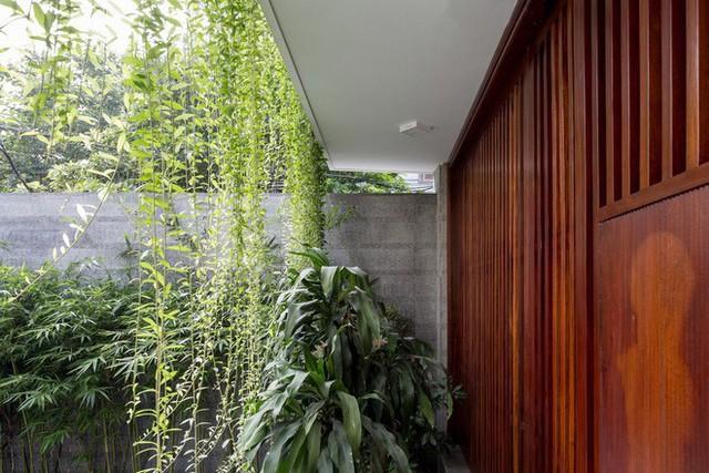 Ngôi nhà nhìn đâu cũng thấy cây xanh và có hẳn một vườn rau trên sân thượng cực rộng ở Hà Nội - Ảnh 20.